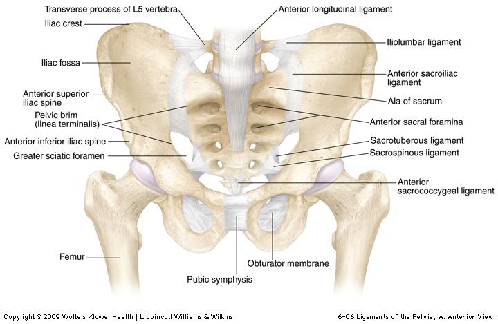 durere în sacrum și articulațiile șoldului crema articulatii dr hart